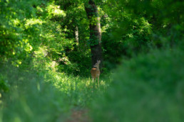 Photo of Deer at ranch for sale